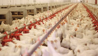 Are Factory Farms Really That Bad