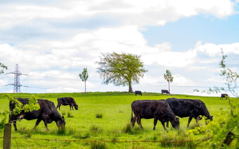 Is Local Meat Better for the Environment