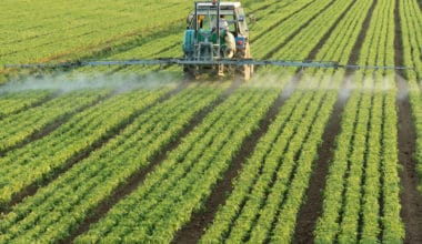 Why Are Pesticides Bad for the Environment