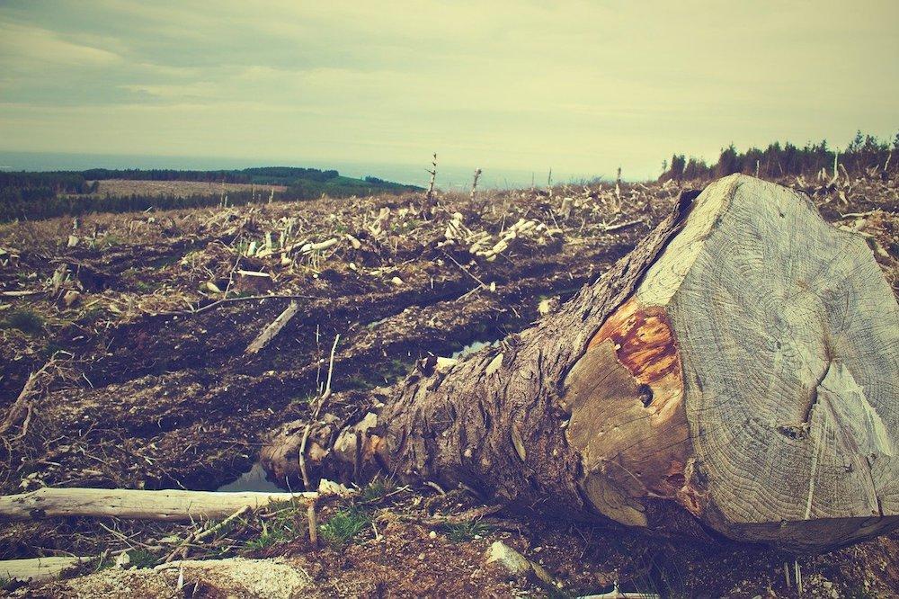 Deforestation for Farming Cows