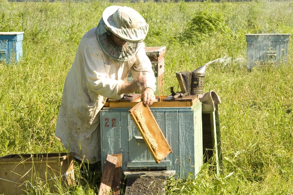 Local Beekeeper Ethical